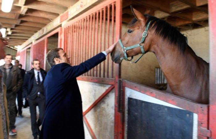 СМИ: Макрон выбрал в качестве подарка Си Цзиньпину коня