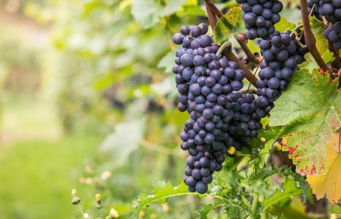 Какие виноградники вошли в 50 лучших в мире в 2020 году?