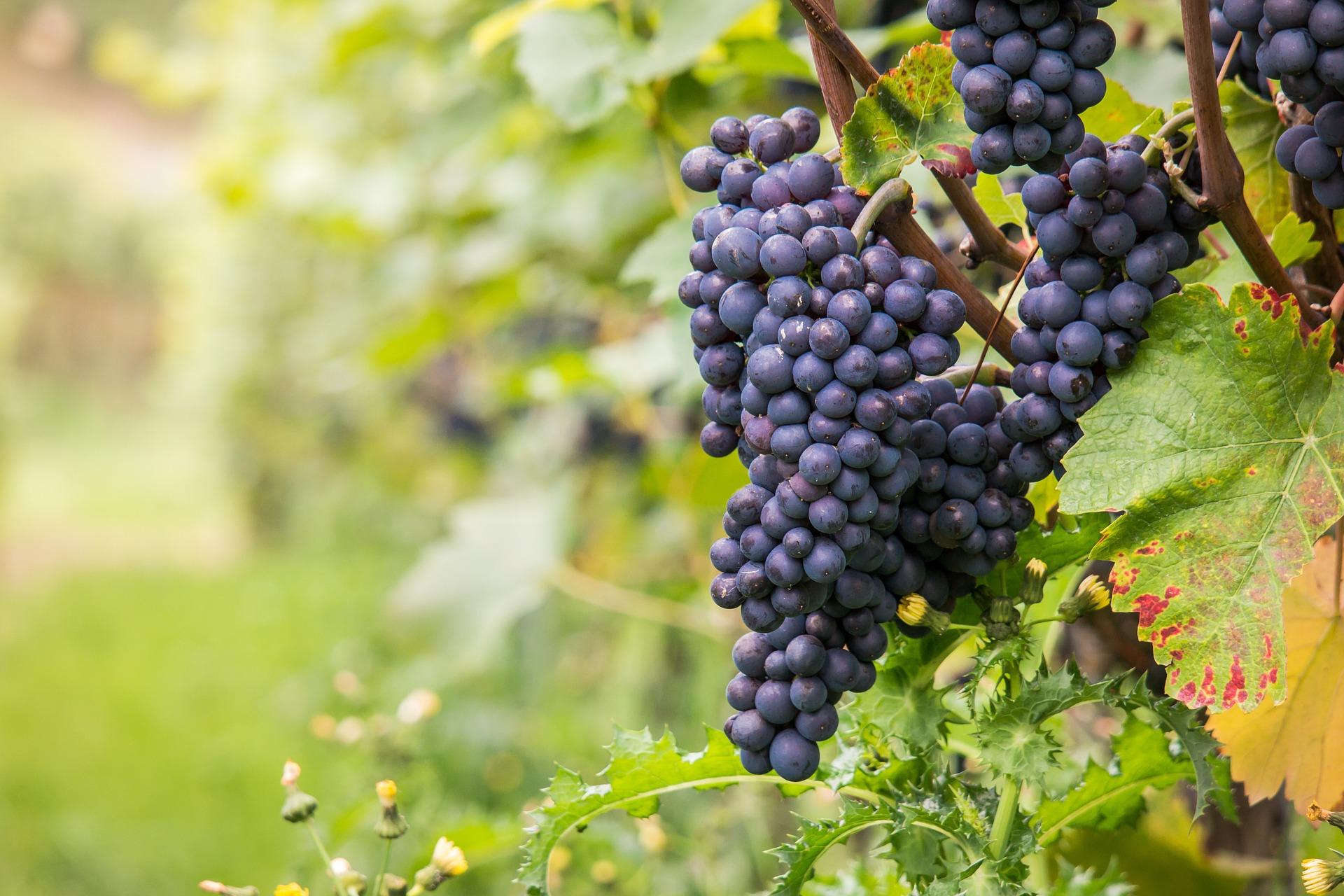 Какие французские виноградники вошли в 50 лучших в мире в 2020 году?