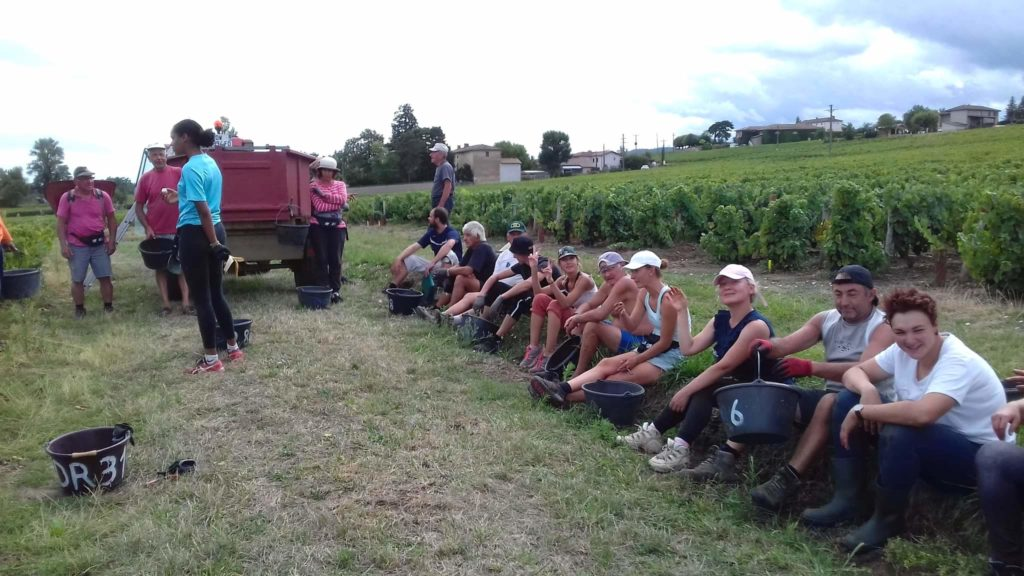 Сбор винограда во Франции