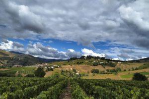 Работа на виноградниках Франции опыт студентки Елены