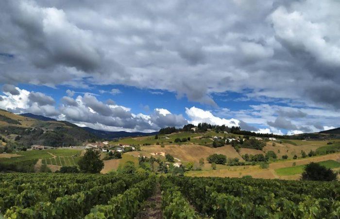 Фото: Работа на виноградниках Франции: опыт студентки Елены