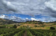 Работа по сбору винограда Франции опыт студентки Елены