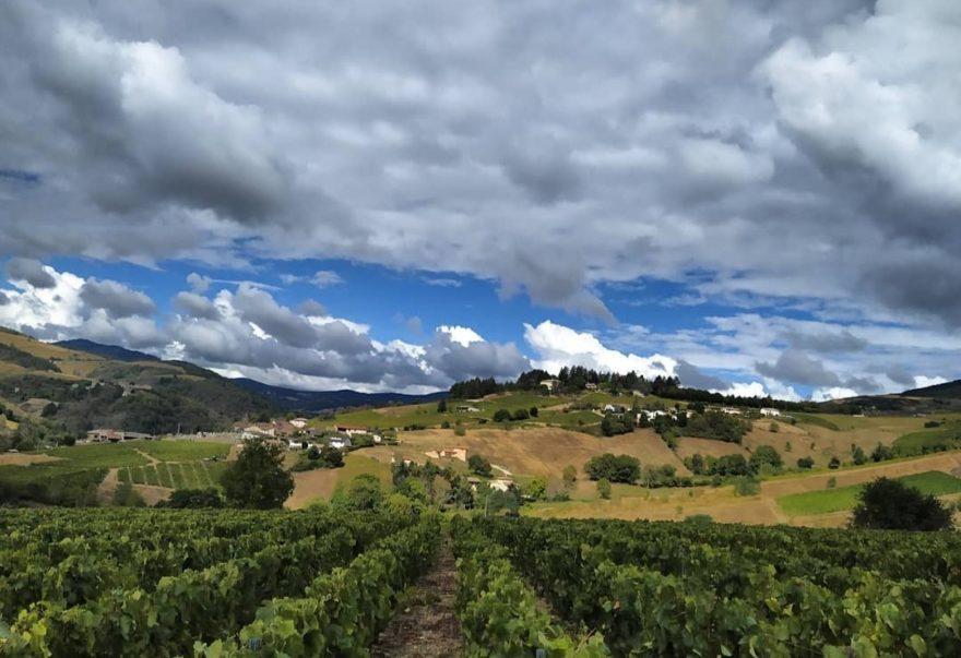 Работа на виноградниках Франции